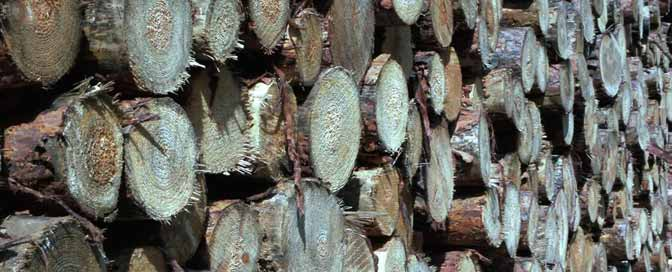250 Holz